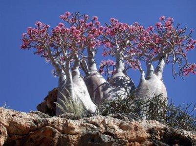 socotra-vegetation1.jpg
