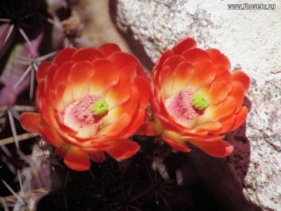 cactus2a01.jpg