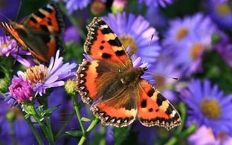 p_butterfly-resear_1631816c.jpg
