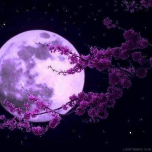 19890-Purple-Moon.jpg
