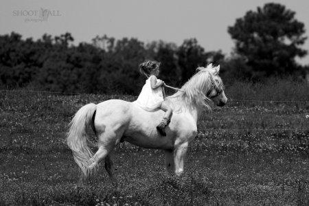 Mystic_Ride.jpg