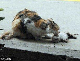 macja-dy.jpg