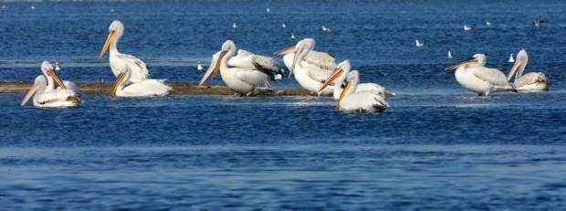 laguna shqiperi5.jpg