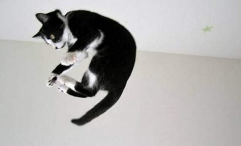 fallingcat.jpg.560x0_q80_crop-smart-770x470.jpg