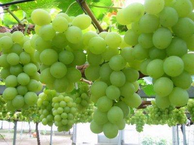 Grape_Seed_41414.jpg