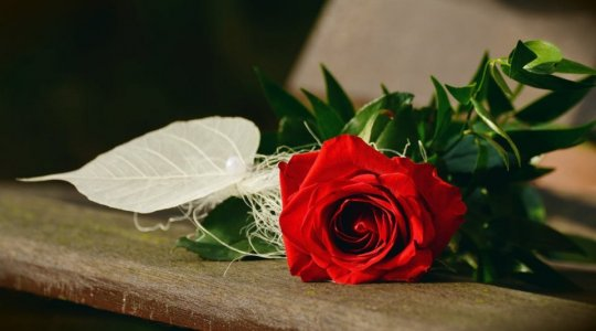 rosa_san-valentino.jpg