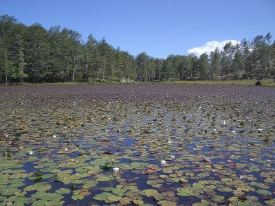 800px-lura-liqeni-i-lul-ve_orig.jpg