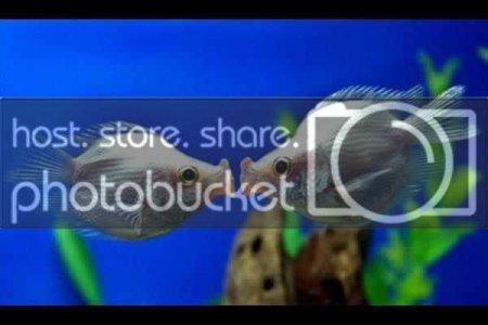 peshk.jpg