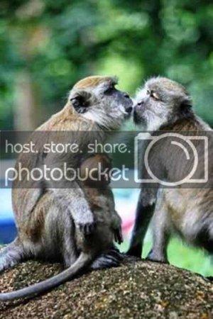 majmu.jpg