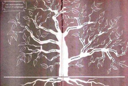 pema-gjuhes-shqipe.jpg